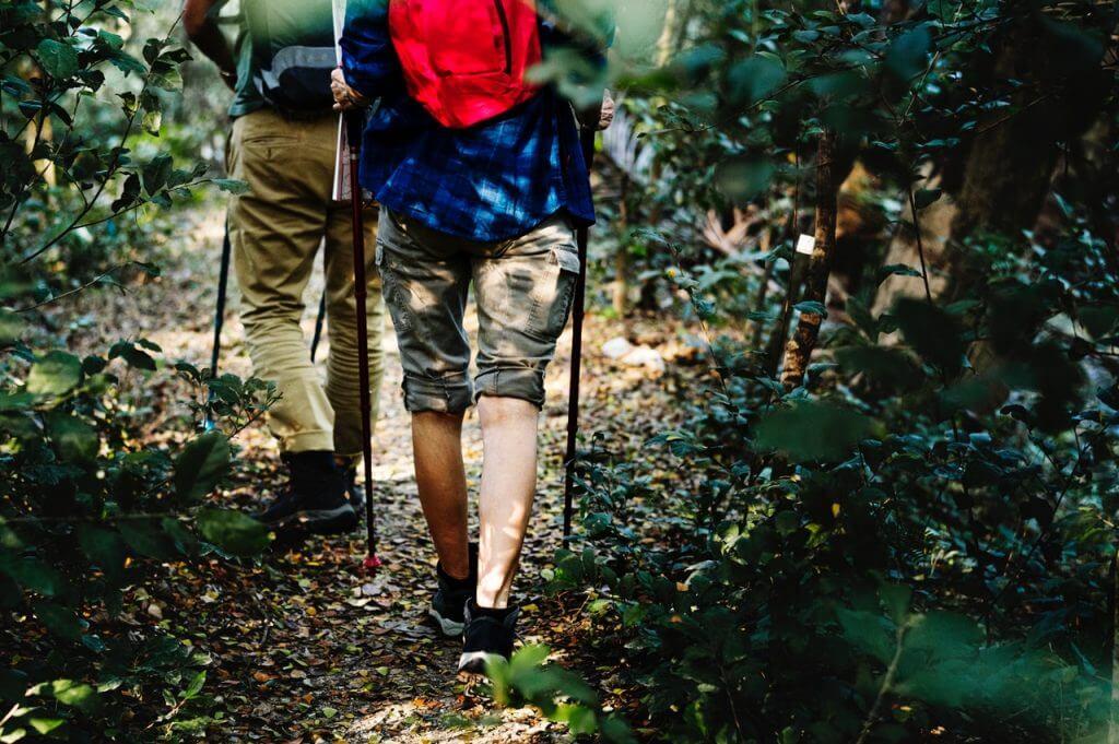 Personas practicando senderismo por un sendero en medio de la naturaleza y el bosque