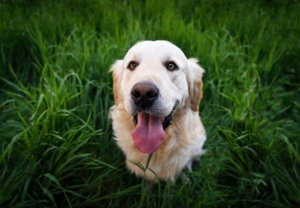 animal-cute-dog-92380