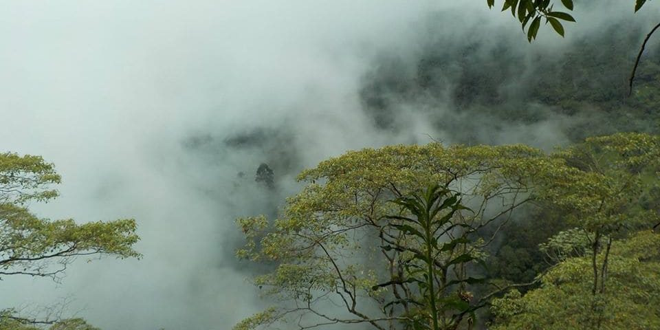 Paisaje de arboles y neblina en Puerto Araujo