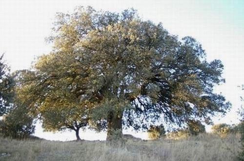 Árbol de la vida en páramo del verjon