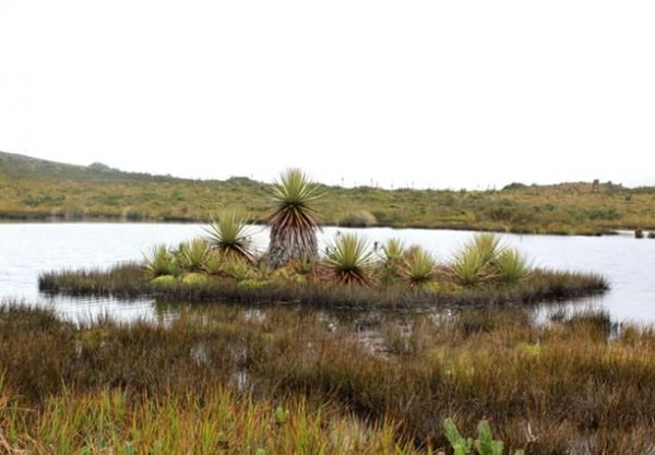 vegetación páramo del verjón