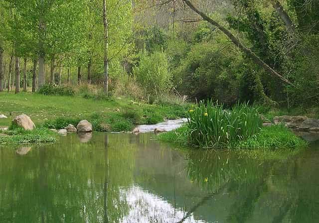 Corriente de agua y vegetación nativa del rio Palancia