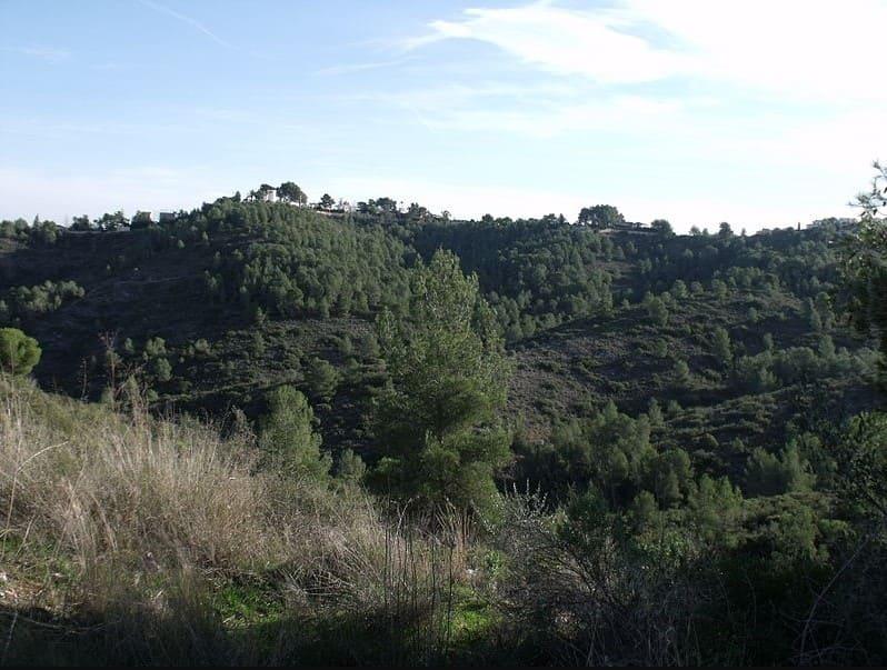 Vegetación nativa y montañas de la sierra de Perenxisa