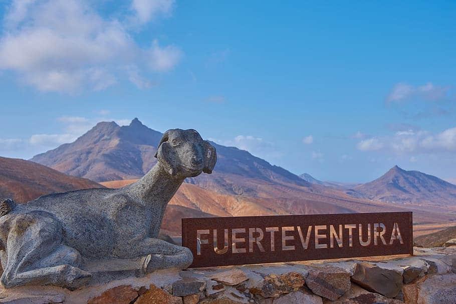 Escultura de una cabra y paisaje de senderismo con un letrero de Fuerteventura